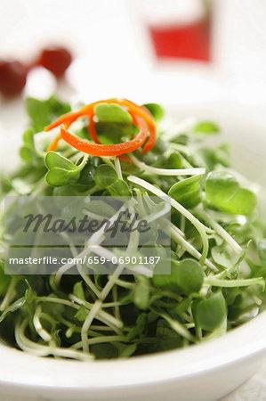 Salad vegetable shoots