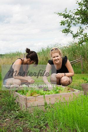 Women in garden picking salad
