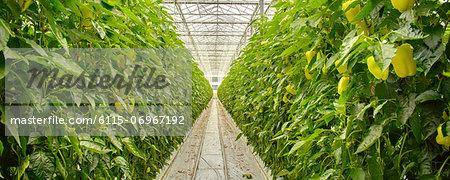 Plants In Greenhouse, Croatia, Slavonia, Europe