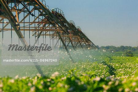 Irrigation Sprinkler System In Field, Croatia, Slovania, Europe