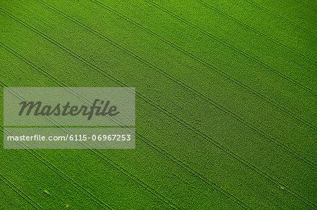 Aerial View, Farm Land, Croatia, Slavonia, Europe