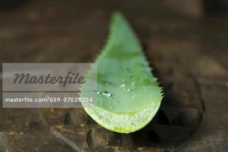 A young aloe vera shoot, cut off