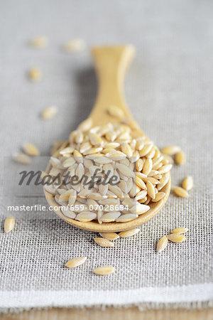 Einkorn wheat on a wooden spoon