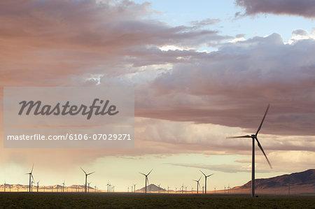 Field of wind generators at sunset