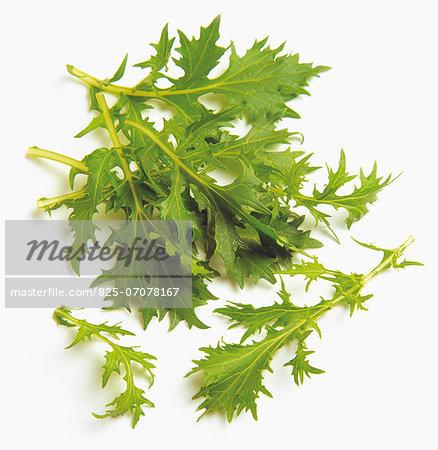 Muzume lettuce