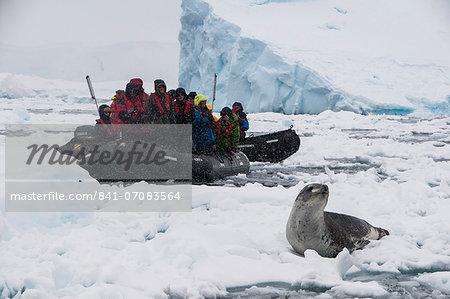 Tourists in a Zodiac looking at a leopard seal (Hydrurga leptonyx), Enterprise Island, Antarctica, Polar Regions