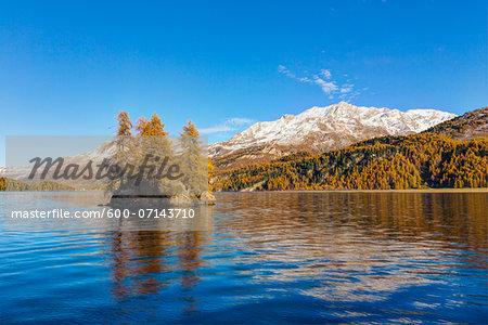 Larch Trees in Autumn Foliage on Rock Island in Lake Sils, Engadin, Canton of Graubunden, Switzerland