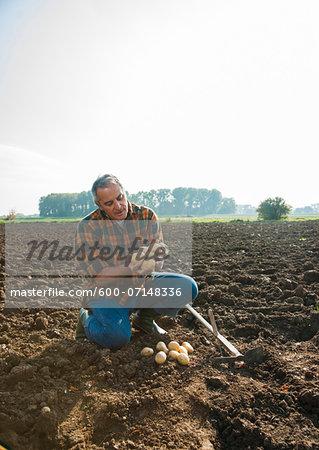 Farmer working in field, looking at potatoes, Germany