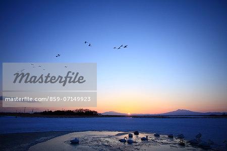 Tofutsuko And Swan, Hokkaido, Japan
