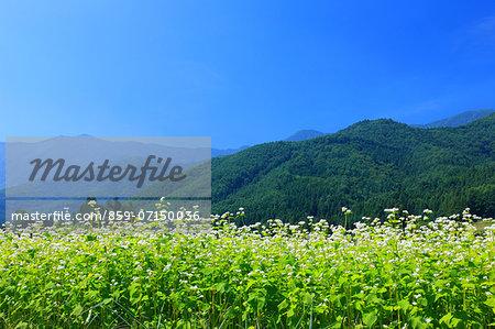 Azumino, Nagano