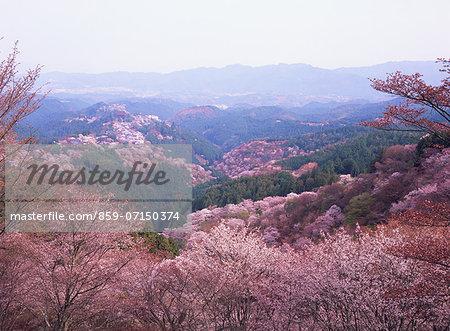 Mt. Yoshino, Nara, Japan