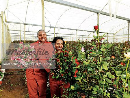 Green Finger Roses, Bloemfontein, Free State