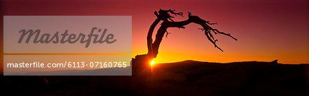 Silhouette of tree in desert landscape