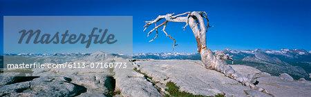 Tree growing on rocky mountaintop