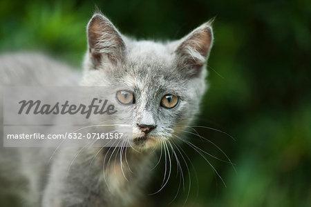 Kitten, portrait
