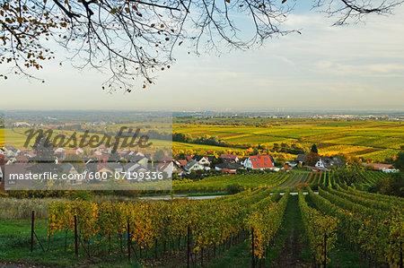 Vineyard Landscape, near Burrweiler, German Wine Route, Rhineland-Palatinate, Germany