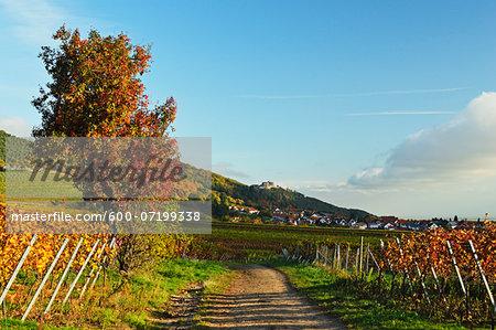 Vineyard Landscape, near St Martin, German Wine Route, Rhineland-Palatinate, Germany