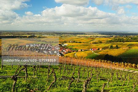 Vineyard Landscape and Varnhalt Village, Ortenau, Baden Wine Route, Baden-Wurttemberg, Germany
