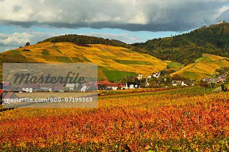Vineyard Landscape, Neuweier Village and Yburg Castle, Ortenau, Baden Wine Route, Baden-Wurttemberg, Germany