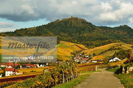Vineyard Landscape, Neuweier Village and Yburg Castle on Hilltop, Ortenau, Baden Wine Route, Baden-Wurttemberg, Germany