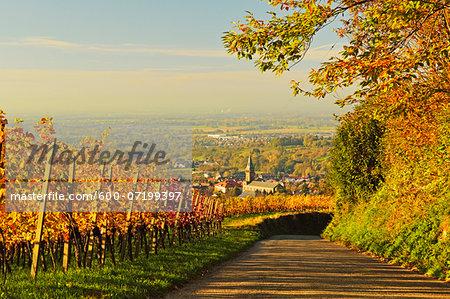 Vineyard Landscape and Lauf Village, Ortenau, Baden Wine Route, Baden-Wurttemberg, Germany