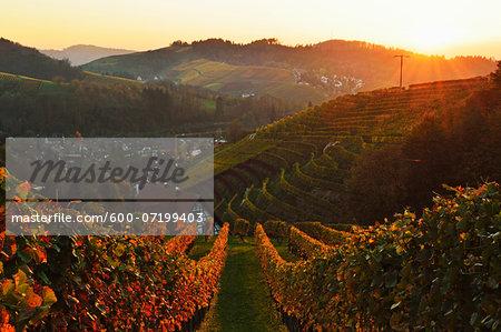 Vineyard Landscape and Sasbachwalden Village, Ortenau, Baden Wine Route, Baden-Wurttemberg, Germany