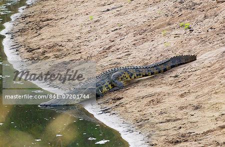 Crocodile, Serengeti, Tanzania, East Africa