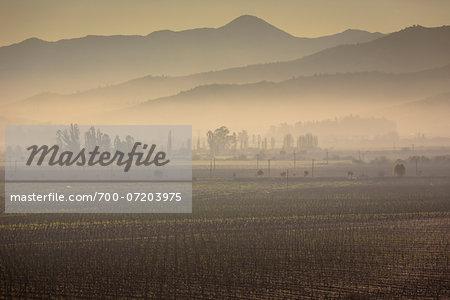 Scenic view of vineyards in Casablanca, Provincia de Valparaiso, Chile