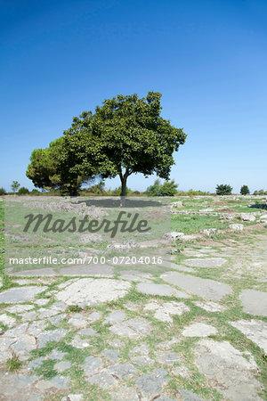 Trees and Ruins of Paestum, Campania, Italy