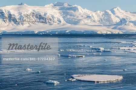 Adult gentoo penguins (Pygoscelis papua) on ice floe in the Errera Channel, Antarctica, Southern Ocean, Polar Regions