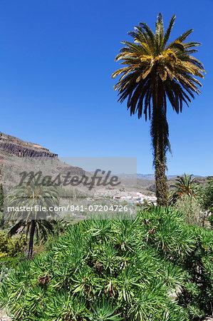 Fataga, Gran Canaria, Canary Islands, Spain, Atlantic, Europe