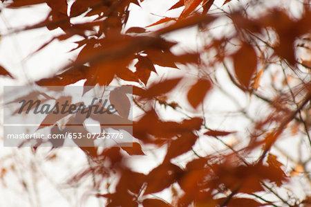 Close-up of various orange leaves