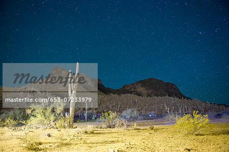 Starry night over cactus filled desert in Tucson, Arizona, USA