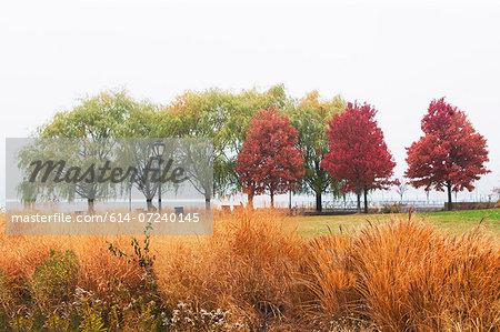 Autumn trees in mist, Bear Island, New York State, USA