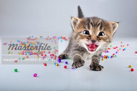 Little kitten with small metal jingle bells beads . Studio shot.
