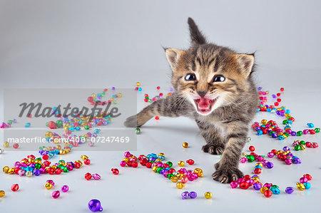 Funny lcute ittle kitten dancing in small metal jingle bells beads . Studio shot.