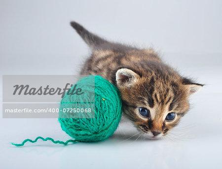 Little kitten playing with a lball . Studio shot.