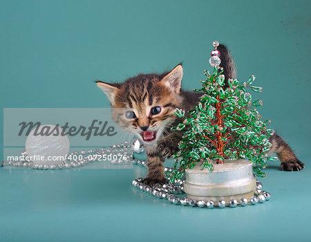 Small  kitten against Christmas tree . Studio shot.