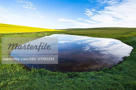 Farm dam amongst wheat and canola fields, Bredasdorp, South Africa