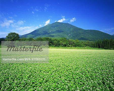 Mt. Kurohime And Buckwheat Field, Nagano, Japan