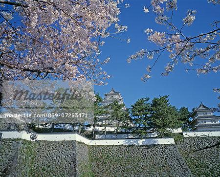 Cherry Blossoms, Shimabara Castel, Nagasaki, Japan