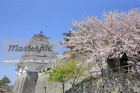 Cherry Blossoms, Karatsu Castle, Saga, Japan