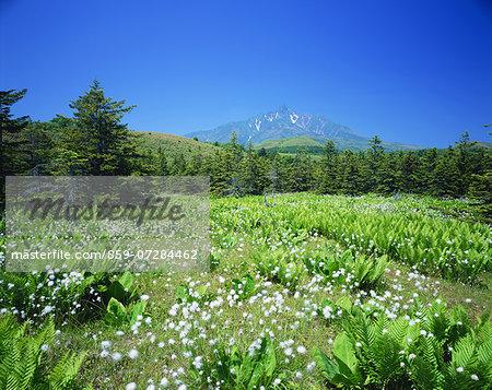 Minamihama Moor And Mt. Rishiri, Hokkaido, Japan