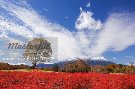 Kaida Highland, Nagano, Japan