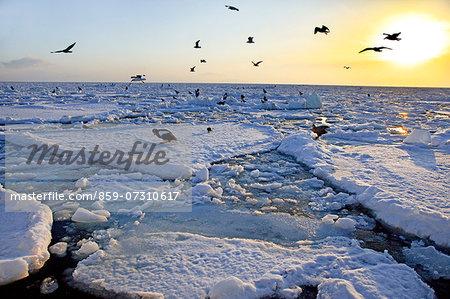 Birds at dawn, Hokkaido
