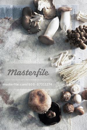 Varieties of Mushrooms, Studio Shot