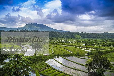 Rice fields, Tirta Gangga, Bali