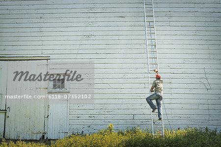 A man climbing a ladder propped against a clapboard barn or farm building.