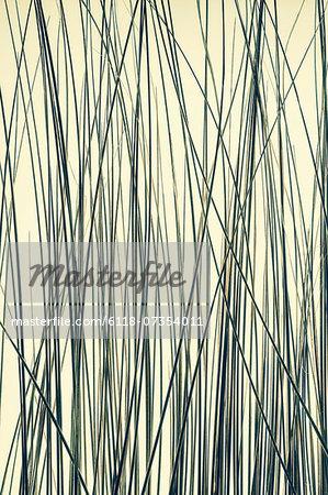 Detail of ornamental grasses