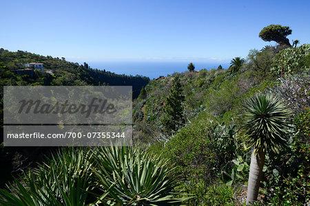 Vegetation in Valley near Tijarafe, La Palma, Santa Cruz de Tenerife, Canary Islands